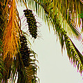 Old Palm by Al Bourassa
