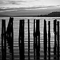Old Pilings On Puget Sound - Tacoma - Washington - August 2013 by Steve G Bisig
