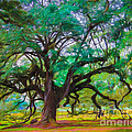 Old Plantation Oak by Perry Webster