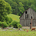 Old Quebec Barn by Marg Lamendeau
