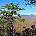 Old Rag Hiking Trail - 121221 by DC Photographer