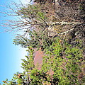 Old Rag Hiking Trail - 121226 by DC Photographer