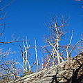 Old Rag Hiking Trail - 121245 by DC Photographer