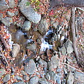 Old Rag Hiking Trail - 121257 by DC Photographer