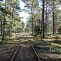 Old Railroad Tracks by Kennerth and Birgitta Kullman