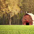 Old Red Barn by Angie Colona