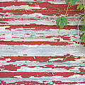 Old Red Barn With Peeling Paint And Vines by Jit Lim