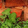 Old Red Wall by Jolanta Meskauskiene