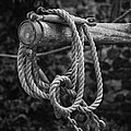 Old Rope by David Hare