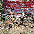 Old Rusty Bicycle With Basket Of Lavender Flowers by Jit Lim
