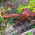 Old Rusty Bike In The Weeds 2 by Duane McCullough