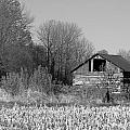 Old Shed by Richard Kitchen