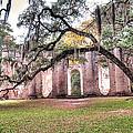 Old Sheldon Church - Bending Oak by Scott Hansen