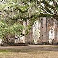 Old Sheldon Church - Bent Oak by Scott Hansen