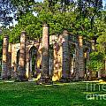 Old Sheldon Church Ruins In South Carolina by Reid Callaway
