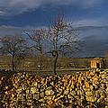 Old Shepherd's Hut by Guido Montanes Castillo