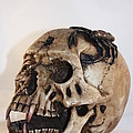 Old Skull With Scorpion On A White Background by Robert D  Brozek