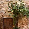 Old Stone House With Plants  by Jaroslav Frank