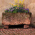 Old Stone Trough And Flowers In Alsace France by Greg Matchick