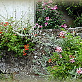 Old Stone Wall by Carla Parris