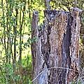 Old Stump by Gordon Elwell