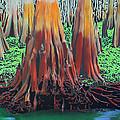 Old Swampy by Deborah Boyd