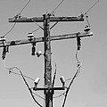 Old Telephone Pole by Dave Mills