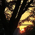 Old Tree And Sunset by Sonali Gangane