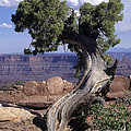Old Tree by Judy Bottler