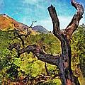 Old Tree Landscape by Danuta Bennett