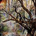 Old Tree Photoart by Debbie Portwood