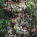 Old Tree by Rafael Salazar