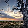 Old Tree Sunset Over Oyster Bay by Michael Thomas