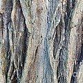 Old Tree Wrinkles by Loreta Mickiene