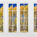 Old Triple16 Pane White Window Colorful Autumn Aspen Forest View by James BO  Insogna