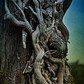 Old Vine by Mary Machare