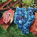 Old Vine Zinfandel by Debbie Hart