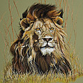 Old Warrior African Lion by Mary Dove