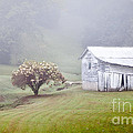 Old Weathered Wooden Barn In Morning Mist by Jo Ann Tomaselli