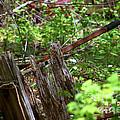 Old Wheelbarrow In The Weeds by Robin Lynne Schwind