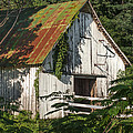 Old Whitewashed Barn In Tennessee by Debbie Karnes