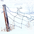 Old Wire Fence by Theresa Tahara