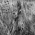 Old Wooden Fence Post In A Field by Jackie Farnsworth