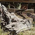 Old Wooden Stump Wit Iron In Antique Color 3010.02 by M K Miller