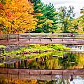 Ole Bull State Park Paint by Steve Harrington