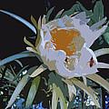 Oleander by John Schneider