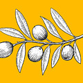 Olive Branch Engraving Style Vector by Alexander p