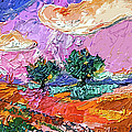Olive Grooves Provence Panoramic Landscape by Ginette Callaway