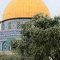 Olive Tree Dome by Munir Alawi