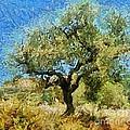 Olive Tree On Van Gogh Manner by Dragica  Micki Fortuna